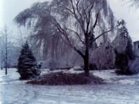 January 14, 1978 Ice Storm - Syosset, New York.  Broken tree limbs are piled beneath the tree that they broke off of during the ice storm.