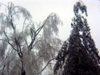 January 14, 1978 Ice Storm - Syosset, New York.