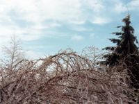 January 15, 1978 Ice Storm - Syosset, New York.