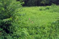Meadow at Sweetbriar Nature Center, Smithtown, NY