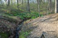 Small feeder stream cascades down a hillside into the Nissequogue River - Sweetbriar Nature Center, Smithtown, NY
